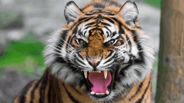 reconstructed_tiger