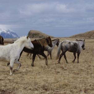 sample_horses